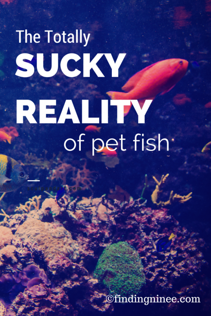 the totally sucky reality of pet fish