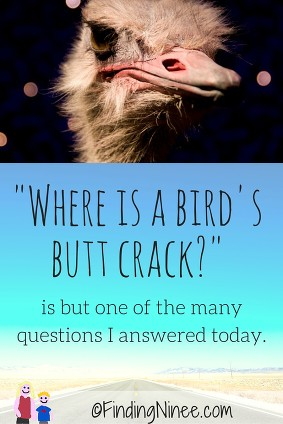 Where is a birds butt crack is one kid question from today - FindingNinee.com