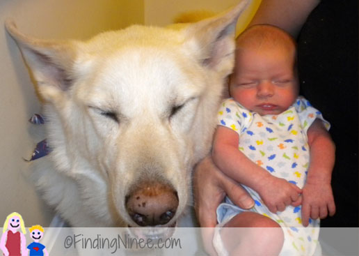 Special shepherd accepts baby even though mom was nervous