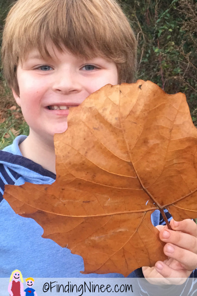 leaves-as-big-as-faces